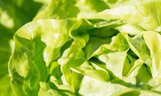 zelena-salata-kalorije-vitamini-i-prednosti-za-zdravlje