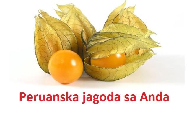 andska-peruanska-jagoda-sadnice-sadnja-uzgoj-i-upotreba-u-ishrani