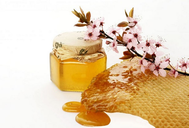 bagremov-med-lekovita-svojstva-upotreba-i-recept