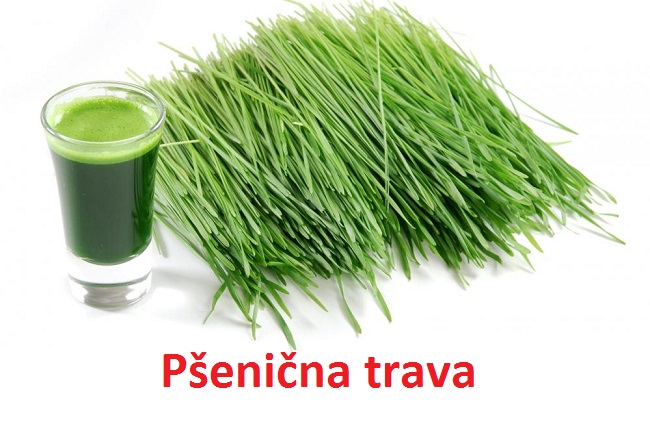 Pšenična trava recepti i lekovitost